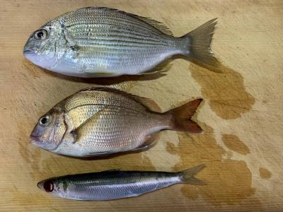 2019年11月24日 釣れた魚種
