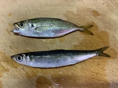 2019年12月1日 釣れた魚種