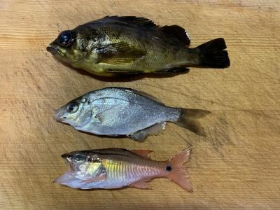 2019年12月8日 釣れた魚種