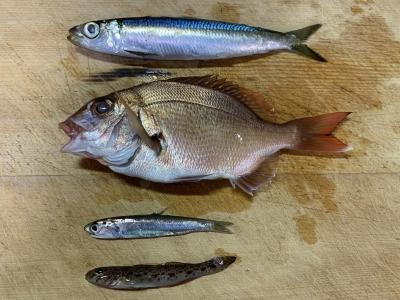 2019年12月15日 釣れた魚種
