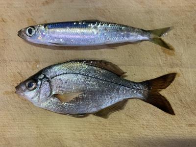 2019年12月29日 釣れた魚種