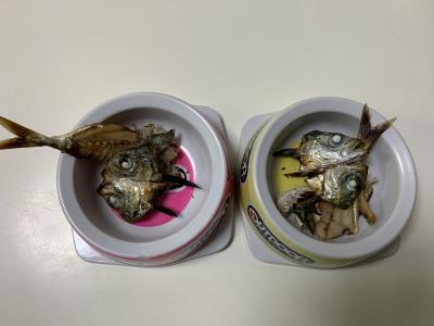 兄妹猫の朝食は釣りたてのアジのアラを焼いたもの
