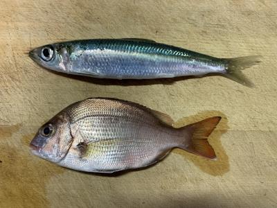 2019年10月14日 釣れた魚種
