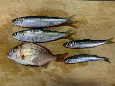 2019年11月3日 釣れた魚種