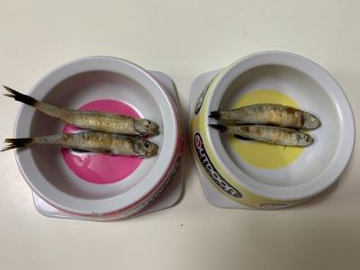 兄妹猫の朝食は釣りたてのトウゴロウイワシを焼いたもの