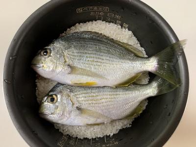 ヘダイ(平鯛)飯