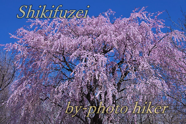 2_202003211508198b6.jpg
