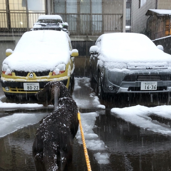 car_snow.jpeg