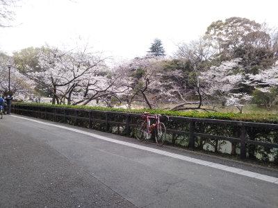 三つ池公園の桜