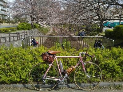 江川緑道の桜