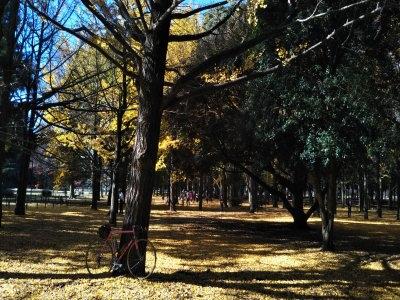 photo_derosa_tokyo_kouyoumeguri2019_11_2019_1130.jpg