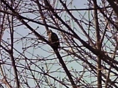 新治の里 野鳥観察会