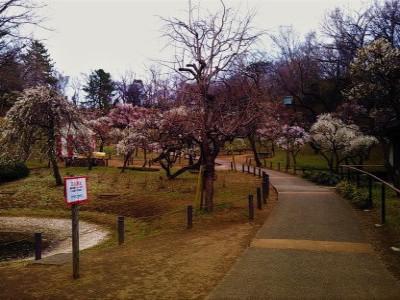 大倉山の梅