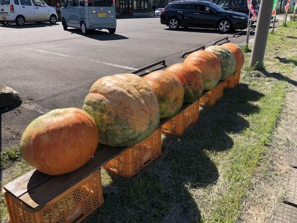 ジャンボかぼちゃ
