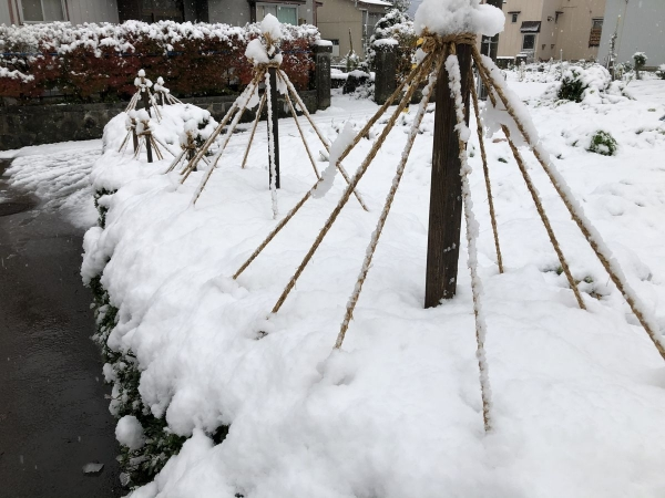 2019-12-06初雪2