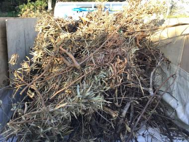 剪定伐採ゴミの片付け
