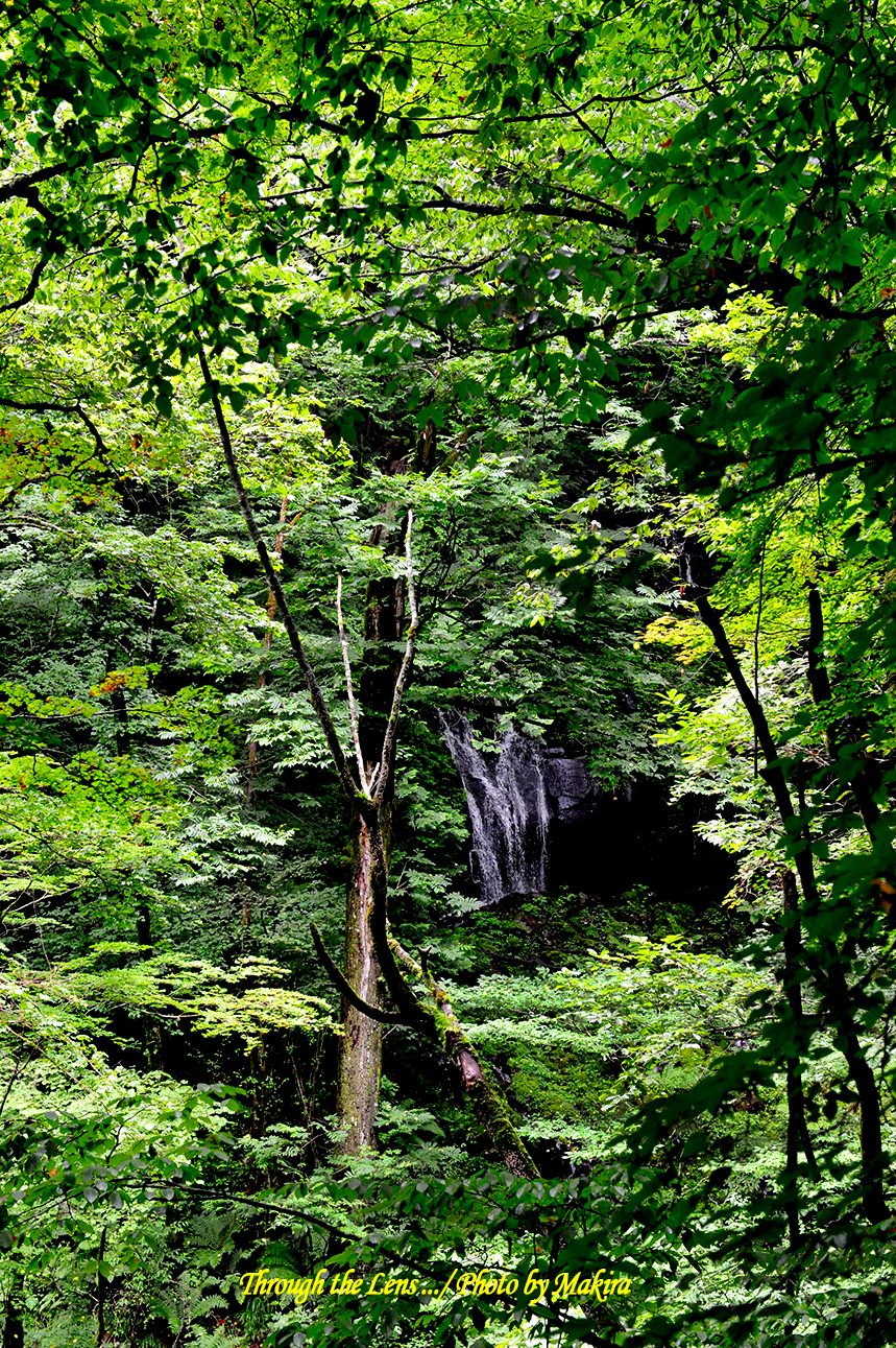 素簾の滝1