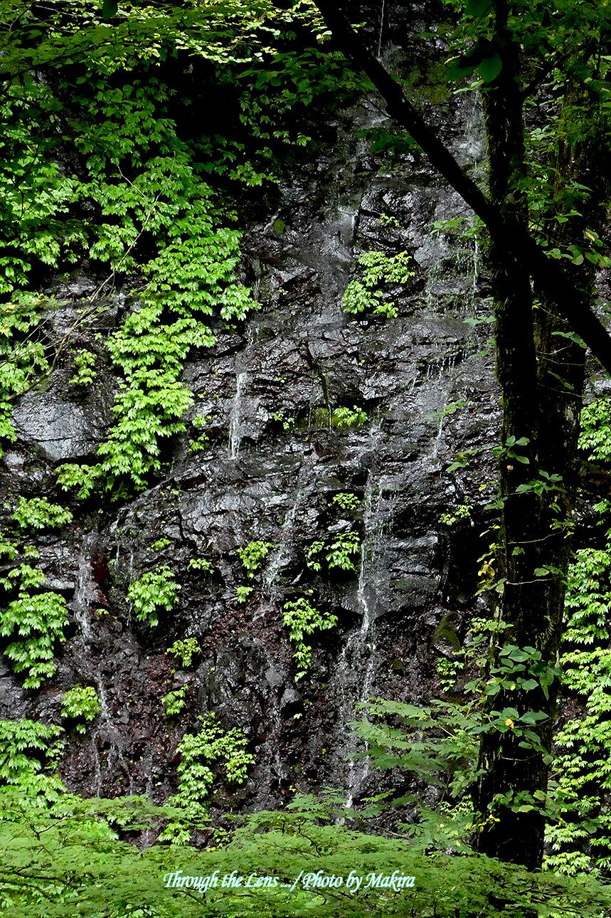 素簾の滝3