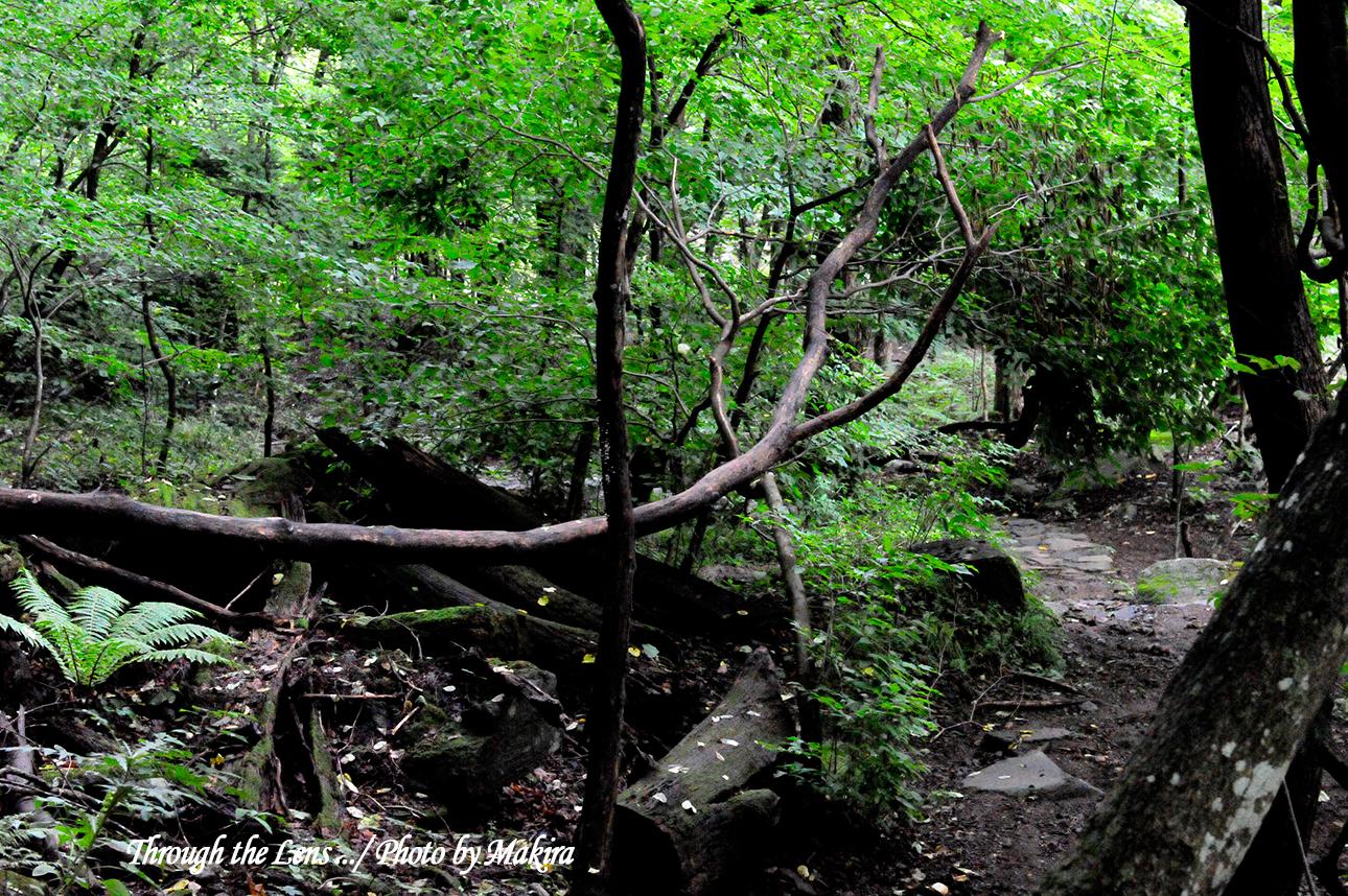 雄飛の滝線歩道1