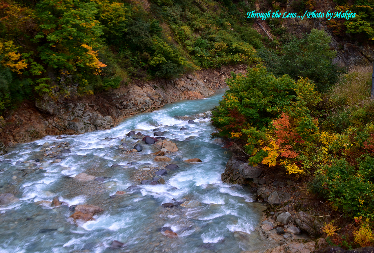 ゴンドラから見渡す一面の黄金世界清津川支流56D4