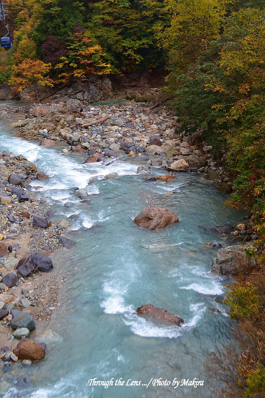 ゴンドラから見渡す一面の黄金世界清津川支流56D5