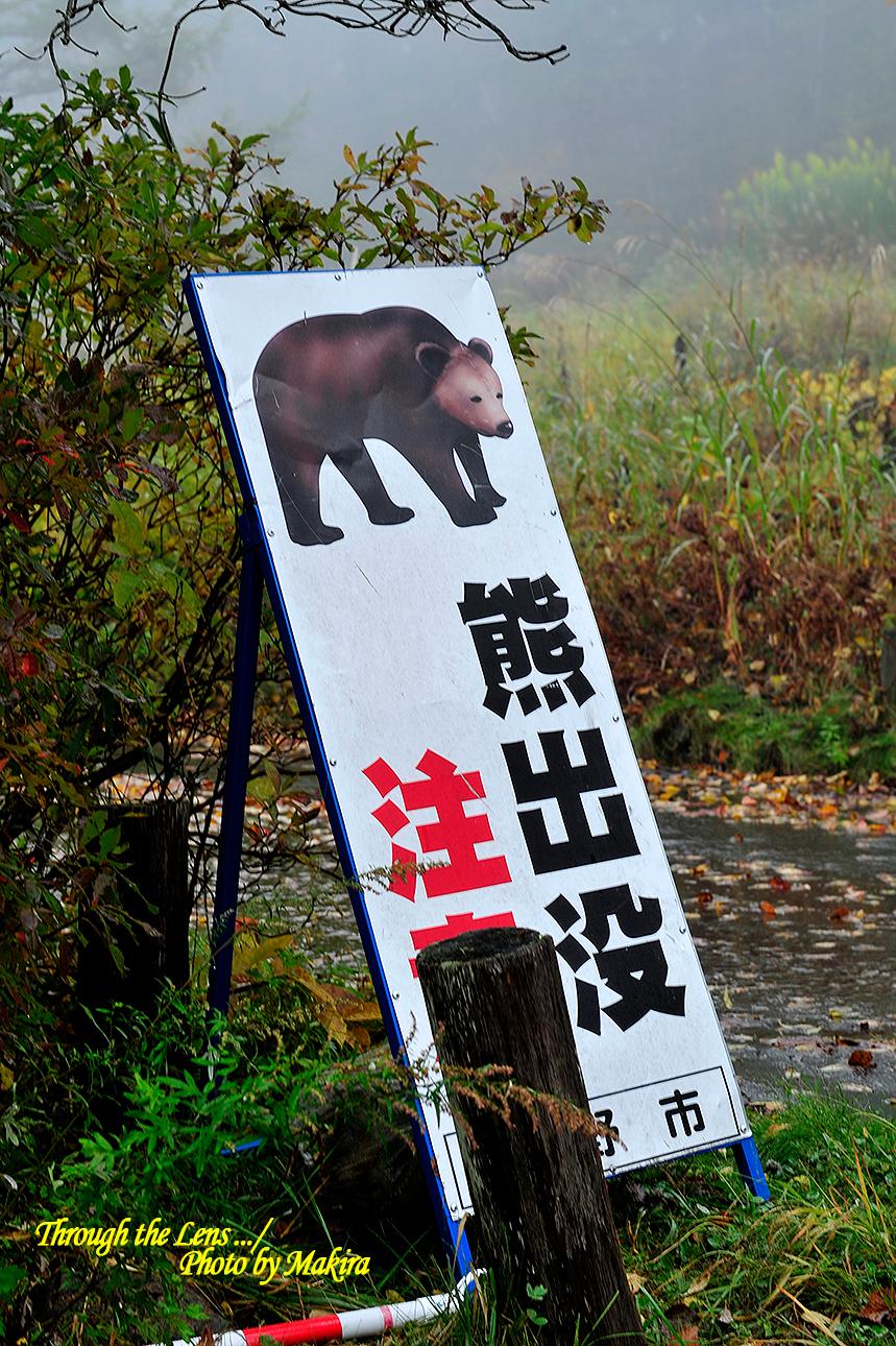 熊出没注意看板1