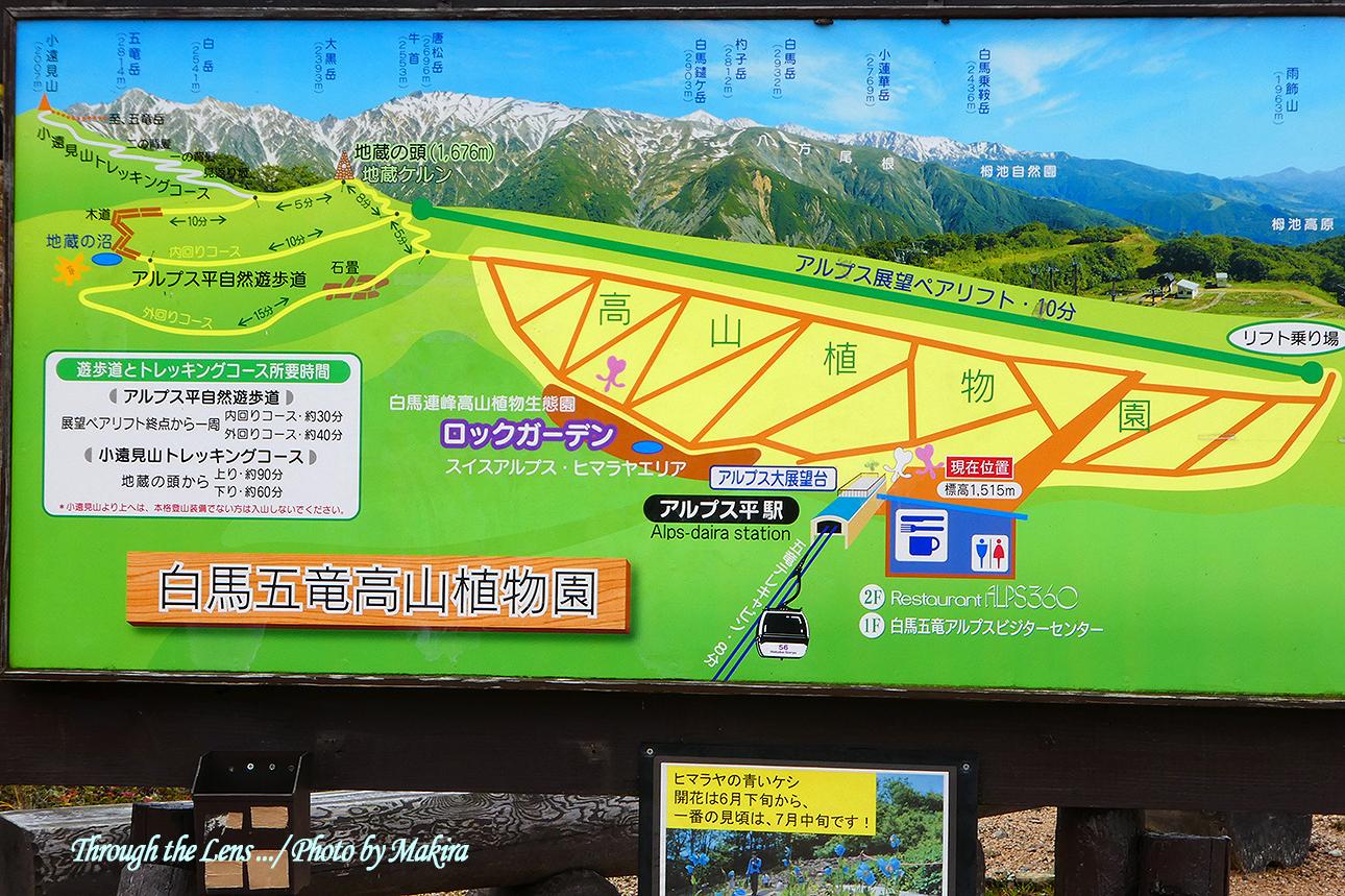 白馬五竜高山植物園図TZ1