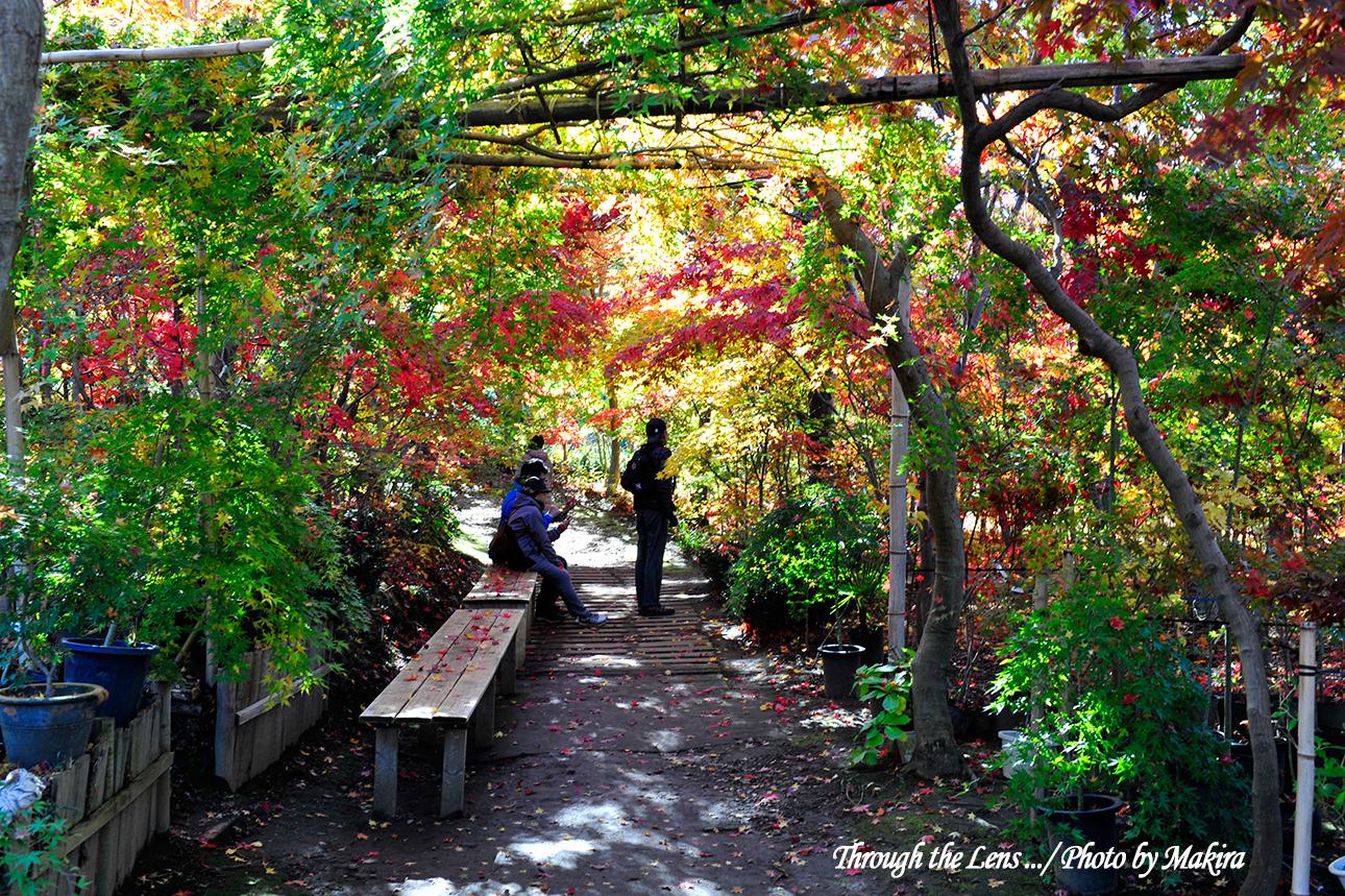 小林槭樹園4