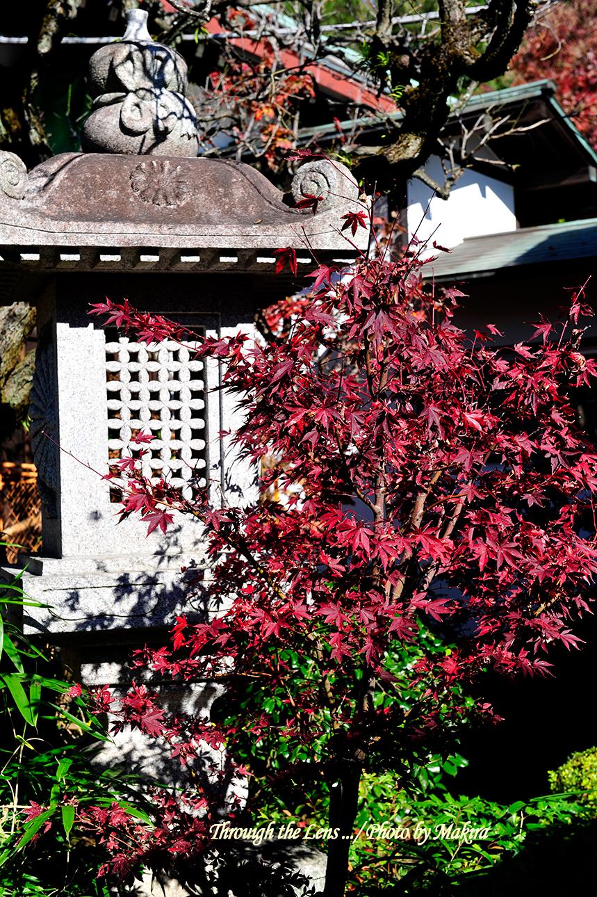 興善院灯籠と紅葉1