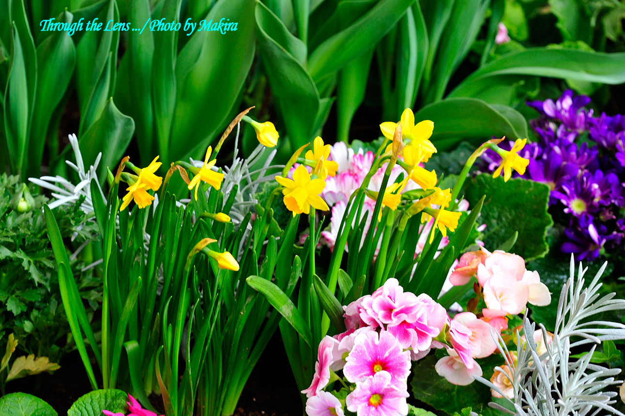 春の花壇1