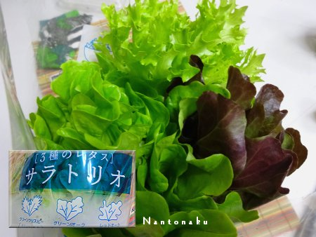 NANTONAKU 10-01 サラトリオ と ピザ 2