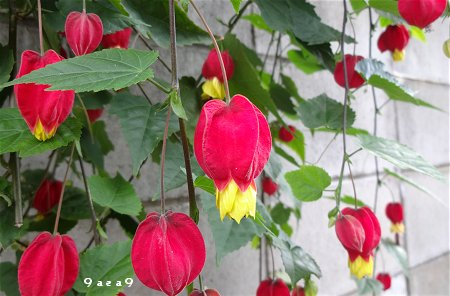 秋の可愛い花 1