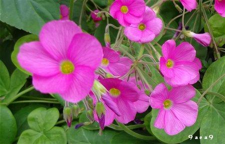 秋の可愛い花 2