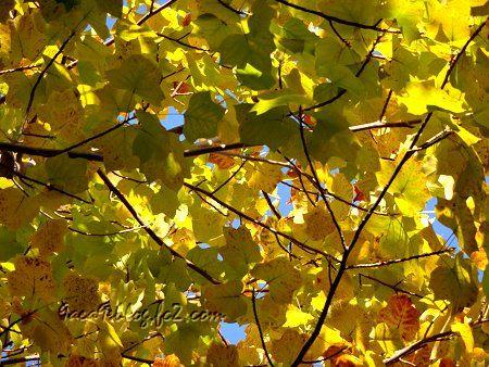 光が紅葉に影響する様3