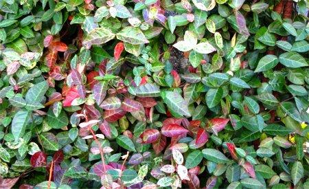 そこらに良くある 植物 3