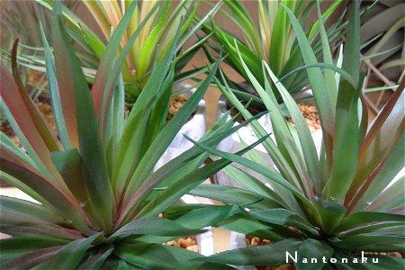 NANTONAKU ちょっと良いかも お安いニトリのフェイクグリーン 1