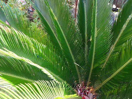実家の植物 2