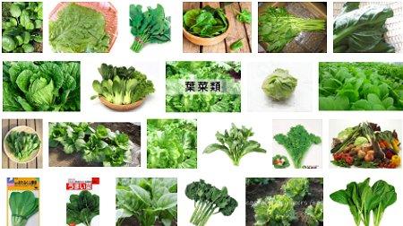 NANTONAKU 葉菜類