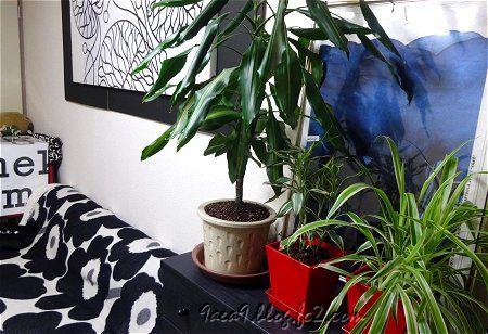部屋 植物 UNIKKO marimekko