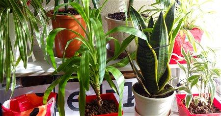 植物 部屋 太陽