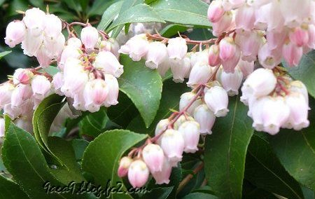 3月 春に咲く花