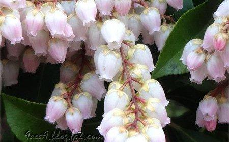 3月 春に咲く花 2
