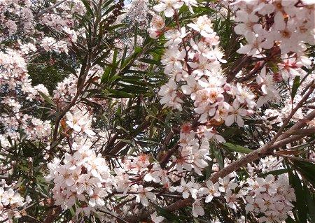 梅の花 1