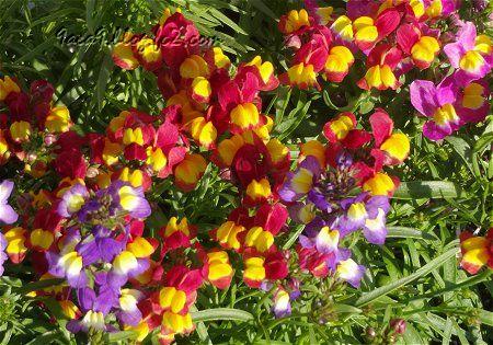艶やかな 春のミックスカラー