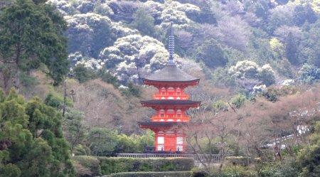 2020 3-20 京都 清水寺 3