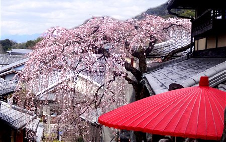 2020 3-20 京都 三年坂×二年坂 周辺 1