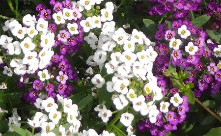 3 26 かわいいお花 1