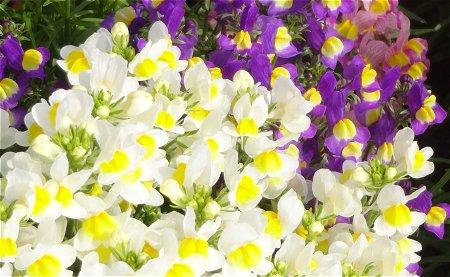 散歩で見かけた 春の花 1