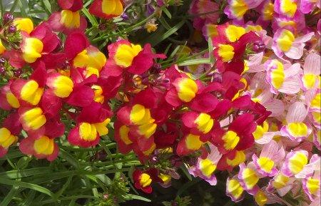 散歩で見かけた 春の花 2