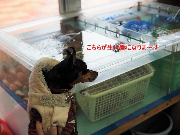 s-PC300154.jpg